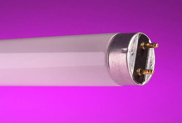 FT218SPDYLT Fluorescent T8