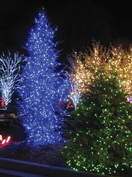 White Outdoor Christmas Trees With Lights